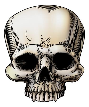 Menschlicher Schädel-Illustration im Retro-Vintage-Stil