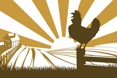 Silhouette rooster cockerel crowing at dawn with sunrise in the background and rolling farm hills and farmhouse