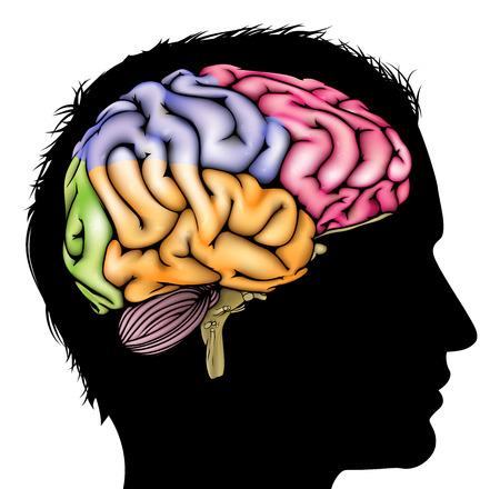 A マン断面化された脳とシルエットに浮かぶ。精神的、心理的、脳の発達、学習と教育やその他の医療テーマの概念  イラスト・ベクター素材