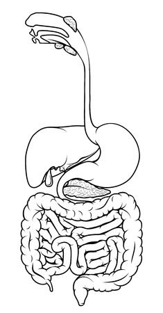 Black and white illustration of the human digestive system, digestive tract or alimentary canal