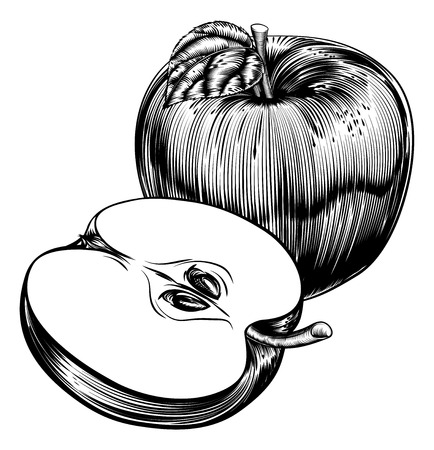 An original illustration of a whole apple and sliced apple fruit in a vintage woodcut or woodblock style