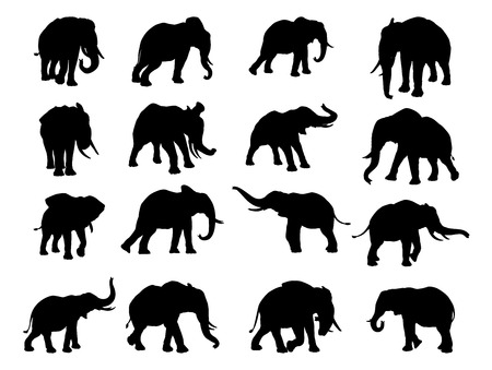 A set of elephants in silhouette in many poses