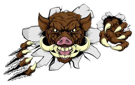 Een wild zwijn of razorback cartoon sport mascotte scheuren door een muur met zijn klauwen