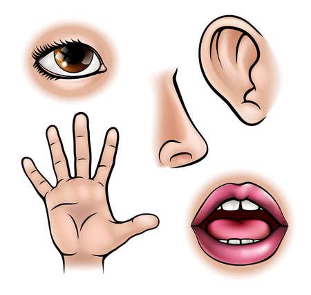 Een wetenschappelijk onderwijs illustratie van pictogrammen die de vijf zintuigen