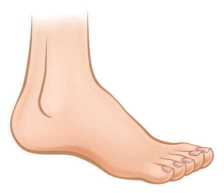 An illustration of a cartoon human foot