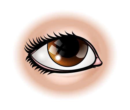 Una ilustración de una parte del cuerpo ojo humano