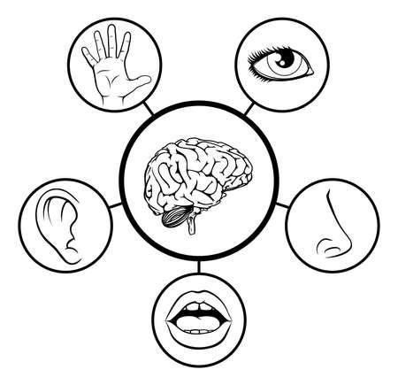Un ejemplo de la enseñanza de las ciencias de iconos que representan los 5 sentidos unido al cerebro central en blanco y negro Ilustración de vector