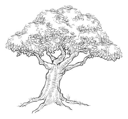 A tree, possibly oak, in a hand drawn vintage woodcut etched engraved style