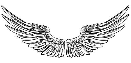 Pair of spread out  eagle bird or angel wings Illustration