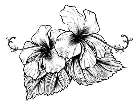Les fleurs d'hibiscus dans un style de gravure sur bois gravée cru