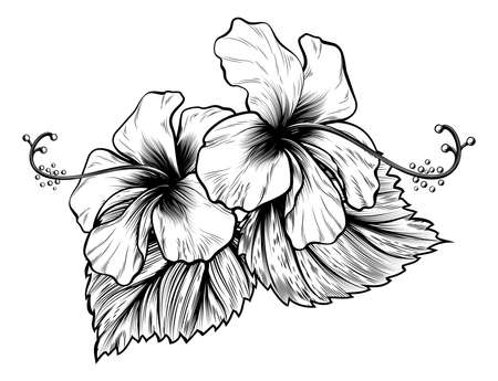 Hibiscus flowers in a vintage woodcut engraved etching style