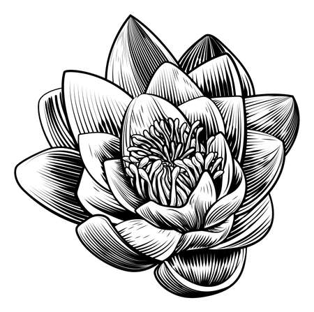 A water lily lotus flower in a vintage woodcut engraved etching style