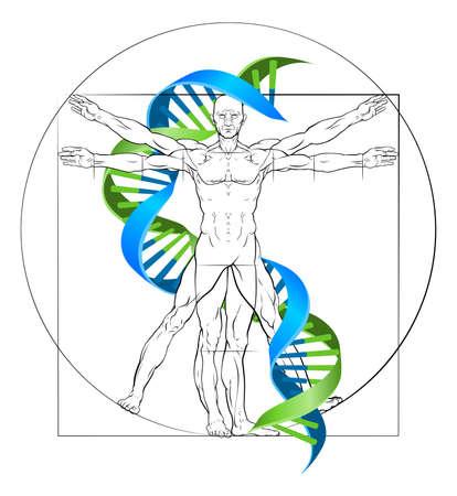 ADN Hombre de Vitruvio concepto de investigación médica con la doble hélice y perfectamente proporcionada figura humana