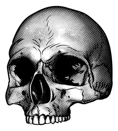 Desenho de crânio em um bloco de madeira vintage retro gravado ou gravado Foto de archivo - 80109443