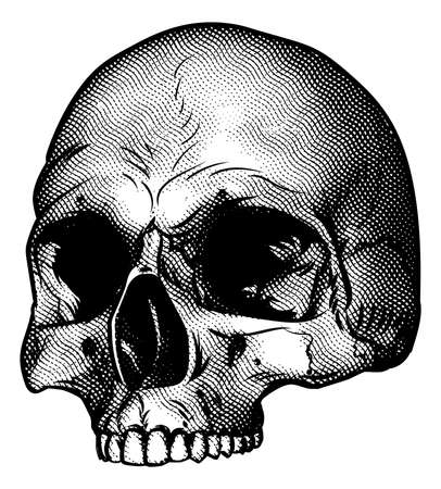 Skull drawing in a retro vintage wood block etched or engraved style