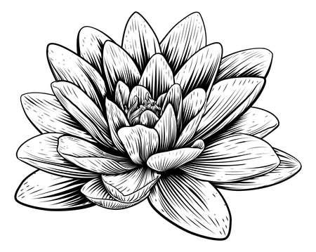 Lotus Flower Water Lily Vintage Woodcut Etching