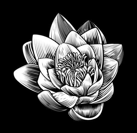 Water Lily Lotus Flower Vintage Style Woodcut