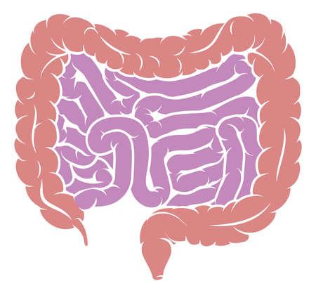 人間の消化器系の腸図図。