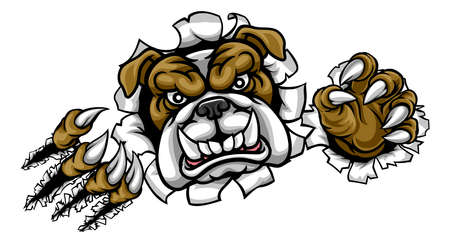 A mean bulldog dog angry animal sports mascot cartoon character ripping through the background Illustration