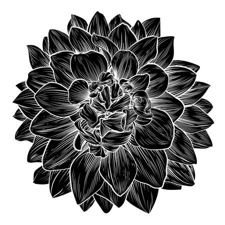 Chrysanthemum or Dahlia Flower Woodcut Illustration