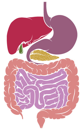 A gastrointestinal tract digestive system human anatomy gut diagram Illustration