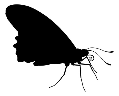 An animal silhouette of a butterfly