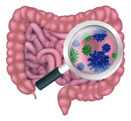 Medical illustration of gut bacteria being shown with a magnifying glass. Could be result of probiotics promoting good digestive flora or other microbes.
