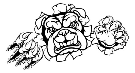 Bulldog mascota deportiva rasgando a través de fondo