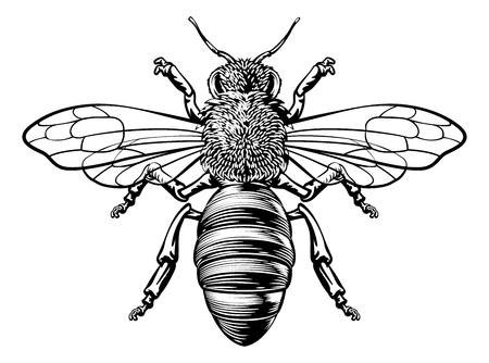 Un abejorro de miel o abejorro en un estilo vintage de dibujo en xilografía Ilustración de vector