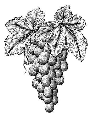 Bunch of Grapes on Grapevine and Leaves
