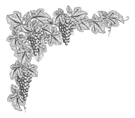 Grape Bunches On Vine Corner Border Design Element Vektorové ilustrace