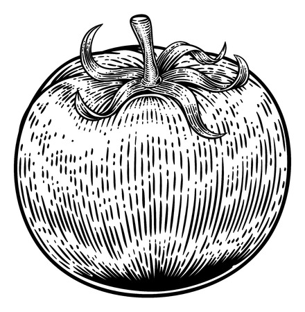Tomato Vintage Woodcut Illustration Vettoriali