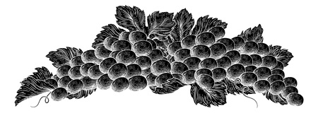 Grapes Bunch Vine And Leaves Woodcut Etching Style