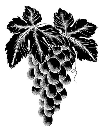 Bunch Of Grapes On Vine With Leaves Ilustracja