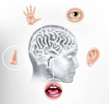 Five Senses Human Brain Head Face AI Concept