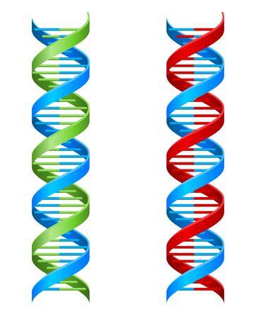DNA Double Helix Molecule Illustration Ilustración de vector
