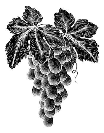 Bunch Of Grapes On Vine With Leaves  イラスト・ベクター素材