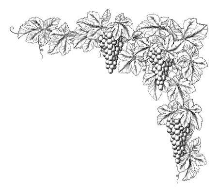 Grape Bunches On Vine Corner Border Design Element  イラスト・ベクター素材