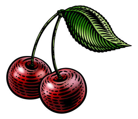 Cherry Berry Fruit Vintage Woodcut Illustration Иллюстрация