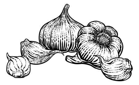 Garlic Vegetable Vintage Woodcut Illustration