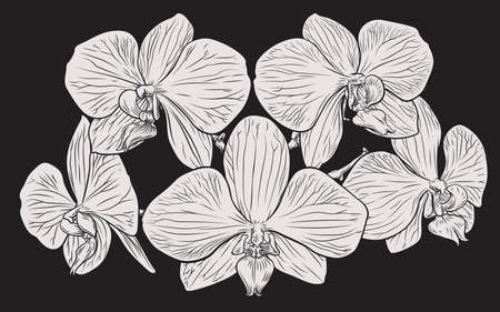 Orchid Flower Woodcut Etching