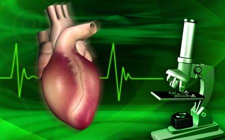 organos internos: Ilustraci�n digital de un coraz�n con pulso eco cardio gramo