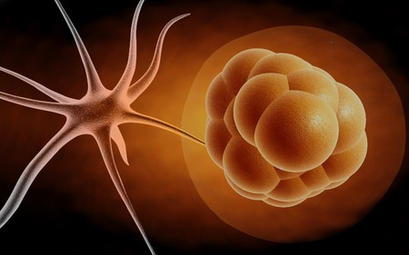 stem cell: stem cell and neuron  Stock Photo