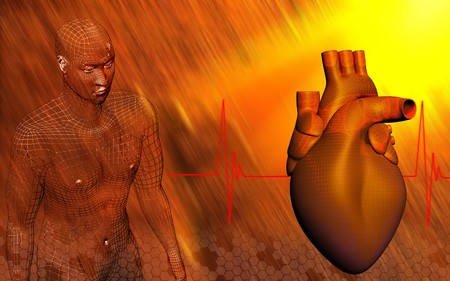Heart and human body  Digital illustration of a heart with eco cardio gram pulse and human body   illustration