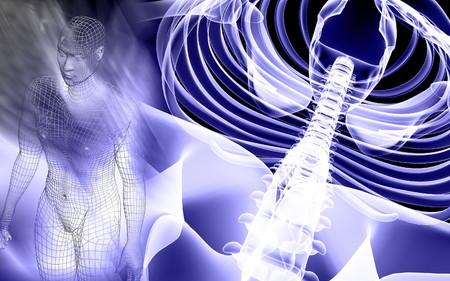 Human spine Stock Photo - 4586031