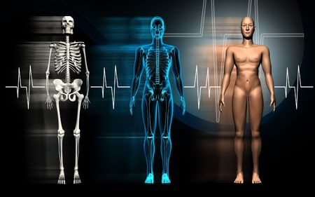 medical scans: Human body