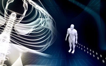 columna vertebral humana: Humanos, la columna vertebral