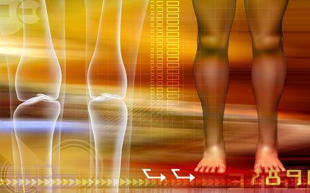 anklebone: Human leg bone with leg   Stock Photo