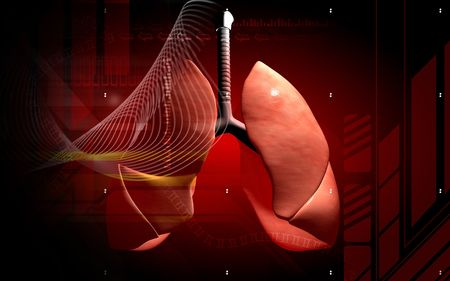 pulmones: Human lungs     Stock Photo