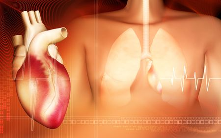 breath: Human body and  lungs with heart Stock Photo